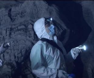 foto: El video que revela cómo en Wuhan se cazan y manipulan murciélagos