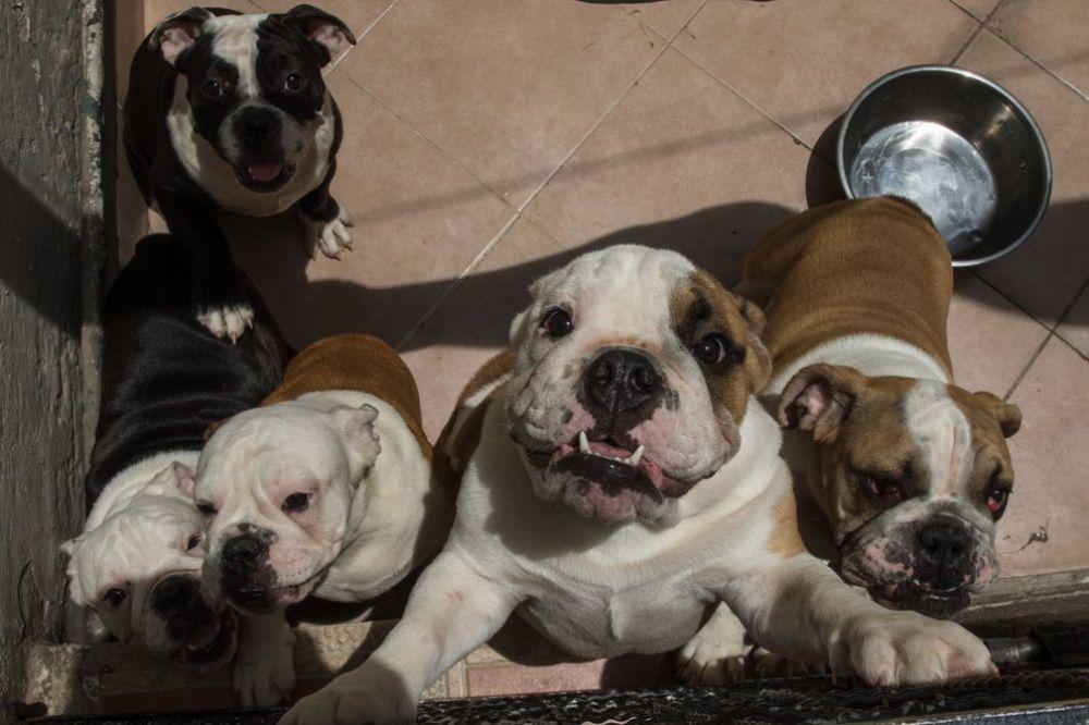 EE.UU. prohibirá la entrada de perros provenientes de más de 100 países