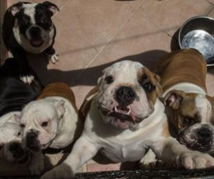foto: EE.UU. prohibirá la entrada de perros provenientes de más de 100 países