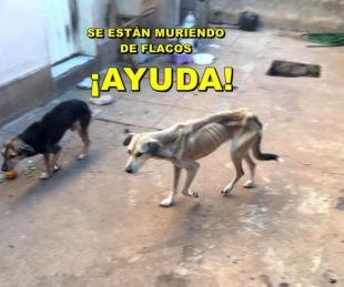 foto: Piden ayuda para poder rescatar a 12 perros en estado deplorable