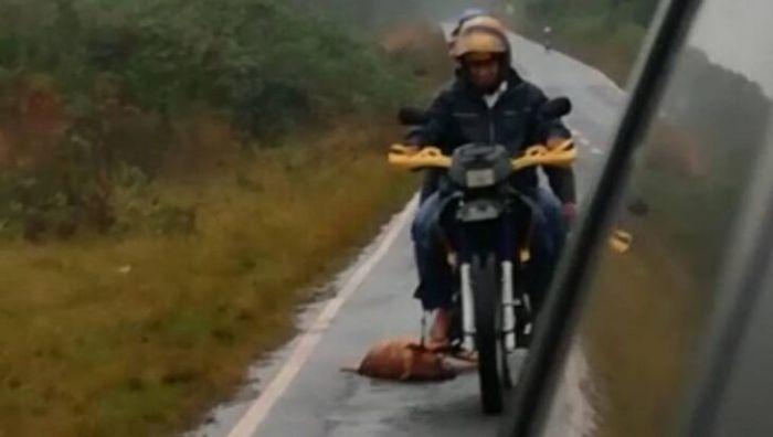 Arrastraba un perro por la ruta, lo filmaron y fue identificado