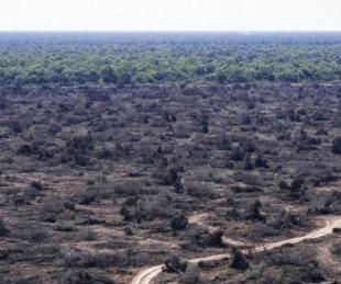 foto: Afirman que se desmontaron más de 10.000 hectáreas en ocho meses