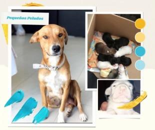 foto: Emotivo rescate de una perrita y sus cachorros recién nacidos