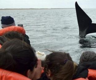 foto: Sortearán avistajes de ballenas y pases de esquí para incentivar la vacunación