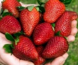 foto: El precio de las frutillas bajó a la mitad en menos de tres semanas