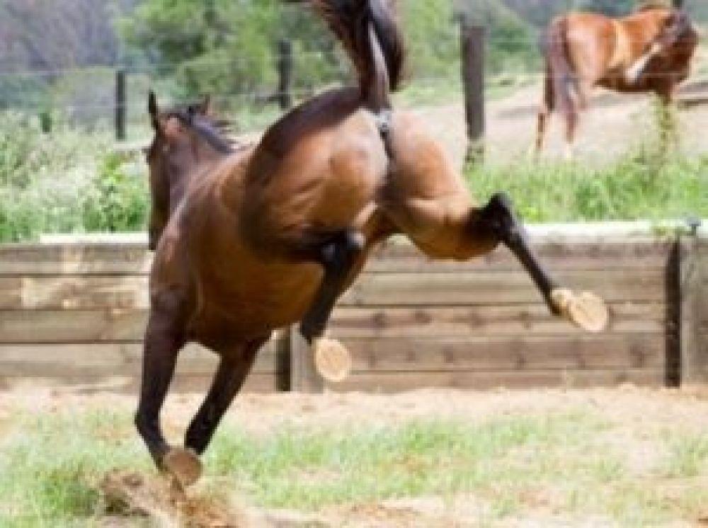 Ituzaingó: Recibió la patada de un caballo en la cara y la internaron