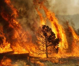 foto: Piden extremar las medidas para evitar incendios forestales
