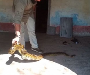 foto: Heredaron una casa de su abuela y encontraron dos anacondas
