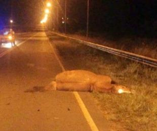 foto: Joven motociclista murió tras chocar contra un caballo