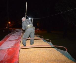 foto: Incautan más de 72 toneladas de maíz trasladadas en dos camiones