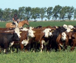 foto: El agro crea 7 de cada 10 dólares que ingresan al país