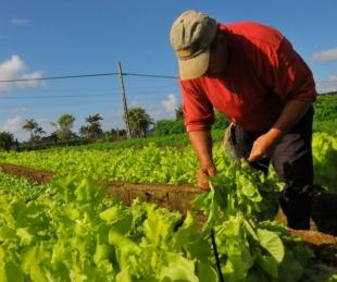 foto: 8 de septiembre: Día Nacional del Agricultor