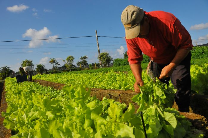 8 de septiembre: Día Nacional del Agricultor