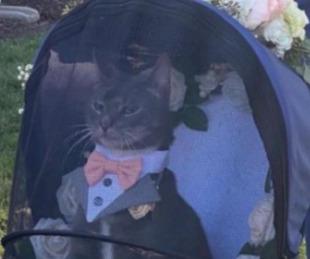 foto: Vistieron de padrino de boda a un gato y la imagen se hizo viral