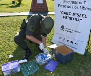 Insólita narcoencomienda: hallaron marihuana en cajas de leche