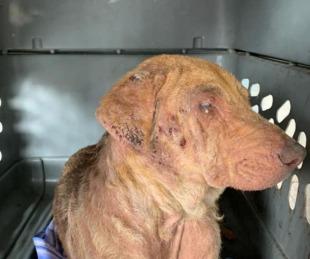 foto: Corrientes: piden ayuda para una perra rescatada de maltrato