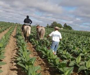 foto: Corrientes: pagan $27 millones a tabacaleros del Plan Componente 2