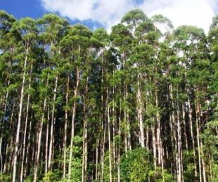 foto: Argentina podría tener 1.000 millones de árboles para 2030