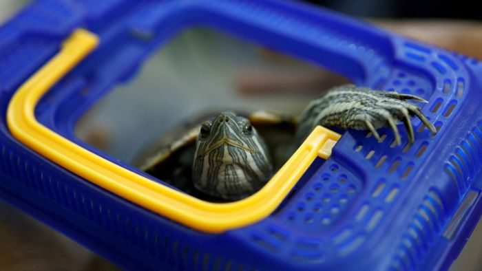 Una tortuga detiene el tráfico aéreo en un aeropuerto de Japón