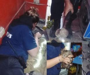 foto: Bomberos Voluntarios rescataron a un gatito de un desagüe