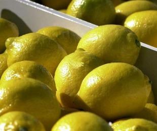 foto: 30 de septiembre: Día Mundial del Limón