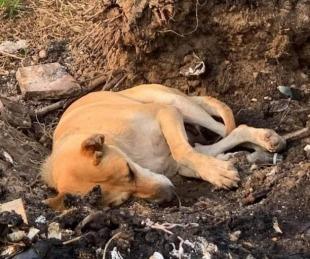 foto: La triste imagen de una perrita que duerme en el basural recorre las redes sociales