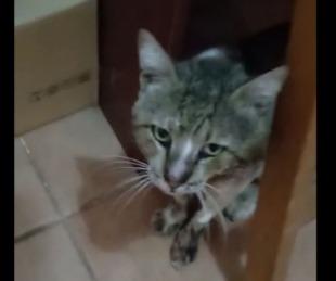 foto: Imágenes sensibles: piden hogar transitorio para un gato agusanado